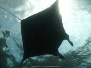 Bali-Dive-154