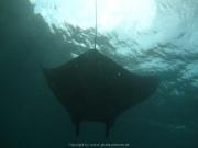 Bali-Dive-155