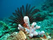 Bali-Dive-156