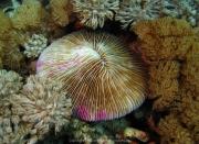 Bali-Dive-160