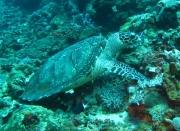 Bali-Dive-161