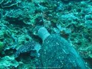 Bali-Dive-162