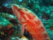Bali-Dive-015
