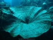 Bali-Dive-020