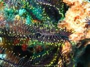 Bali-Dive-023