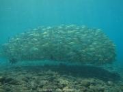 Bali-Dive-025