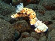 Bali-Dive-030