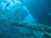 Bali-Dive-037