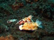 Bali-Dive-048
