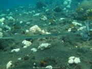 Bali-Dive-053
