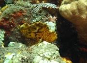 Bali-Dive-054