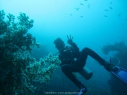 Bali-Dive-056