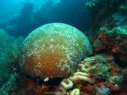 Bali-Dive-061
