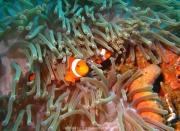 Bali-Dive-088