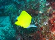 Bali-Dive-089