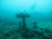 Bali-Dive-090