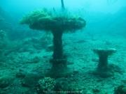 Bali-Dive-091