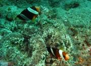 Bali-Dive-094