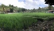 Bali-136