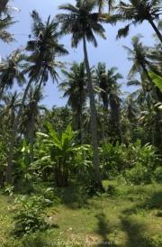 Bali-167