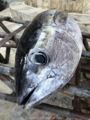 Bali-223