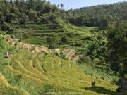 Bali-006