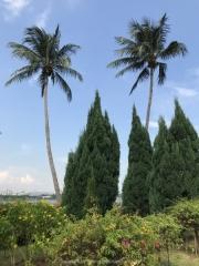 Singapore - 233