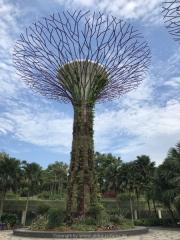 Singapore - 239