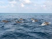 Malediven 02-2019 -049