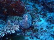 Malediven 02-2019 -089