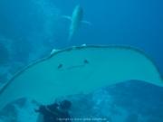 Malediven 02-2019 -111