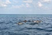 Malediven 02-2019 -048