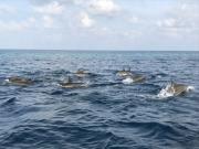 Malediven 02-2019 -051