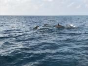Malediven 02-2019 -054