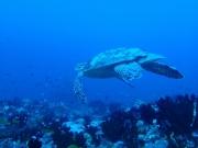 Malediven 02-2019 -088