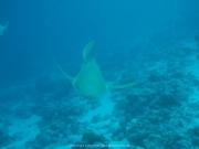Malediven 02-2019 -113