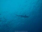 Malediven 02-2019 -119