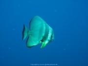 Malediven 02-2019 -126
